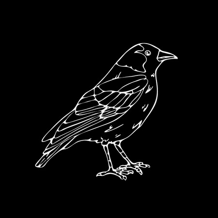 Hand-drawn pencil graphics,small bird, jackdaw,  bird, blackbird, nightingale,  crow. Engraving, stencil style. Black and white logo, sign, emblem, symbol. Stamp, seal. Simple illustration. Sketch.
