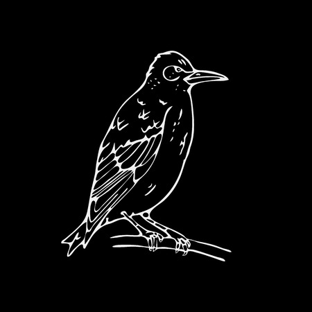 starling: Hand-drawn pencil graphics,small bird, starling, woodpecker, oriole. Engraving, stencil style. Black and white logo, sign, emblem, symbol. Stamp, seal. Simple illustration. Sketch. Illustration