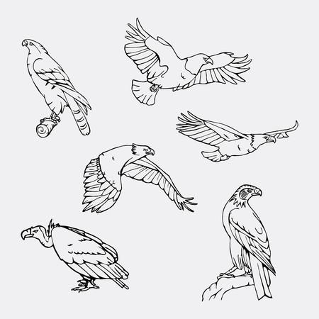Birds of prey set. Bird engraved style emblem. Hand drawn style. Linocut, stencil vector art. Black and white, minimal. Stock Vector - 74640628