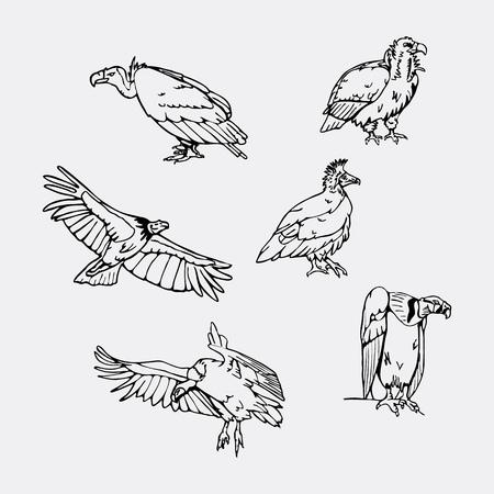 osprey: Birds of prey set. Bird engraved style emblem. Hand drawn style. Linocut, stencil vector art. Black and white, minimal.