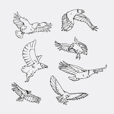 Birds of prey set. Bird engraved style emblem. Hand drawn style. Linocut, stencil vector art. Black and white, minimal on gray backgropund. Stock Vector - 74640653