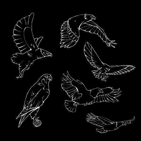 Birds of prey set. Bird engraved style emblem. Hand drawn style. Linocut, stencil vector art. Black and white, minimal on black background.