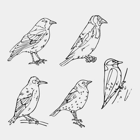 chickadee: Birds engraved style. Set emblem. Bird, oriole, chickadee, sparrow, blackbird, nightingale, finch, bunting, hangbird, goldfinch, canary, bullfinch, siskin, crow,rook. Engraving, stencil style. Logo, sign,  symbol. Stamp, seal. Simple sketch.