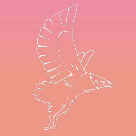 osprey: Hand-drawn pencil graphics, vulture, eagle, osprey, falcon, hawk, scavenger, condor, karkar, kite.Engraving, stencil style. Bird predator.Logo,sign,emblem,symbol Stamp,seal. Simple illustration Sketch
