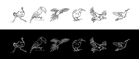 Hand-drawn pencil graphics of birds set vector illustration