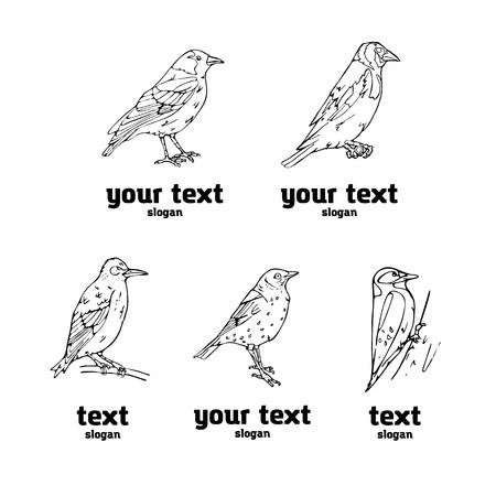 Birds engraved style. Set emblem. Bird, oriole, chickadee, sparrow, blackbird, nightingale, finch, bunting, hangbird, goldfinch, canary, bullfinch, siskin. Engraving, stencil style. Logo, sign,  symbol. Stamp, seal. Simple sketch.