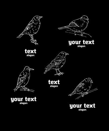 Pájaros estilo grabado. Establecer emblema. Pájaro, oropéndola, carbonero, gorrión, mirlo, ruiseñor, pinzón, banderín, colgado, jilguero, canario, camachuelo, jilguero. Grabado, estilo plantilla. Logotipo, signo, símbolo. Sello, sello. Esbozo simple. Logos