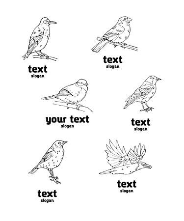 Pájaros estilo grabado. Establecer emblema. Pájaro, oropéndola, carbonero, gorrión, mirlo, ruiseñor, pinzón, banderín, colgado, jilguero, canario, camachuelo, jilguero. Grabado, estilo plantilla. Logotipo, signo, símbolo. Sello, sello. Esbozo simple.