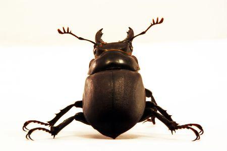 Beetle shell Stock Photo