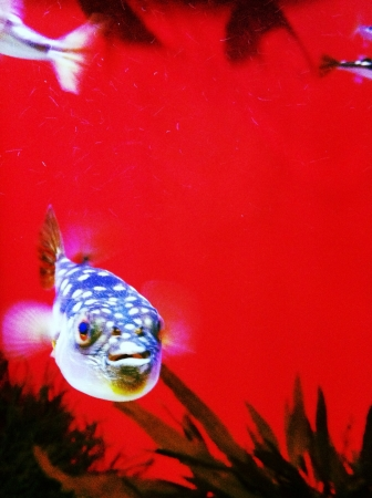 Color contrasts of fish and background