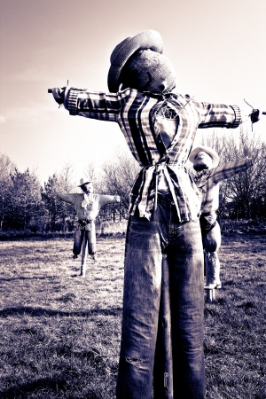 Creepy scarecrows in a field