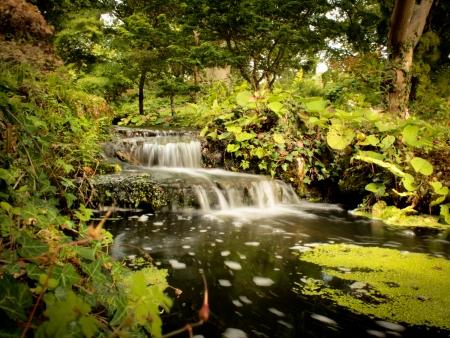 Stream with waterfalls through a lush garden