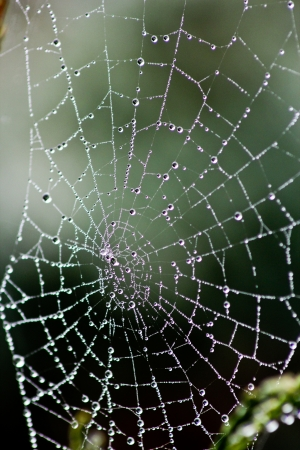 A spiderss web heavy with water droplets from an autumn morning mist photo