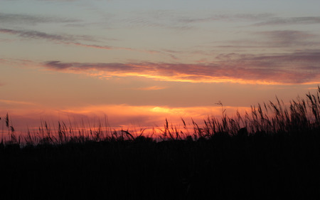 sillouette: orange sunset catches clouds above sillouette of long grass