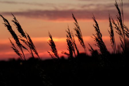 sillouette: orange sunset catches clouds above sillouette of grasses