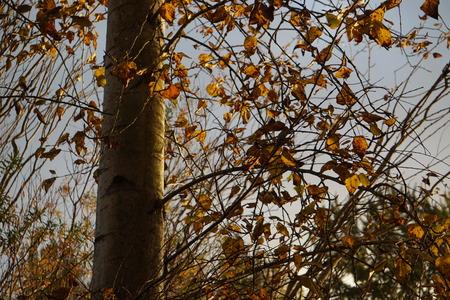 Sun shining on beautiful fall leaves Stock Photo - 111833203