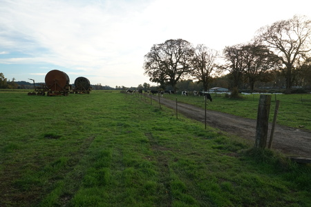 rural farm with cattle coming in for feed and irrigation equipment