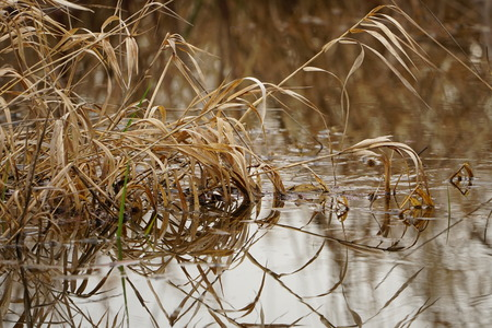 Grasses in the wetlands of the Pacific Northwest