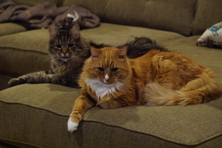 Two cats lounging on couch