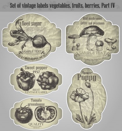set  vintage labels fruits, vegetables, berries - inspired by floral retro originals Vector