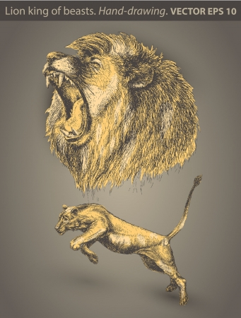 set Lion  animal, wild cat