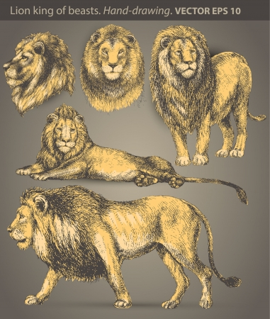 set Lion  animal, wild cat Vector