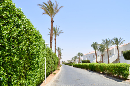 A beautiful live fence of green bushes, plants with leaves in a tropical resort with palm trees and a white building with a roof of red tiles on a background of a blue sky on a sunny day Banco de Imagens