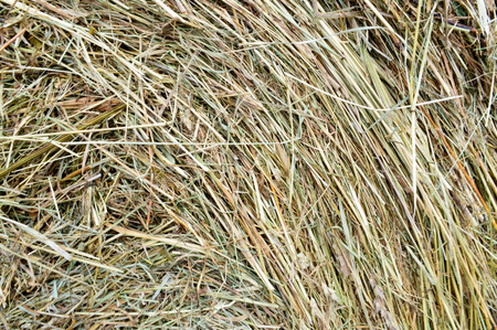 The texture of a round natural dried dry haystack of straw is a dry grass with spikelets and grass blades of brown yellow.