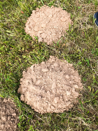 Round earthen mole burrows. Houses moles against the background of green grass. The background.