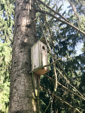 A wooden brown birdhouse, a house for birds in a forest on a pine tree.