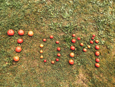 Tomato lettering. Word made from vegetables. the letters T, O and M, the word TOM are lined with red and yellow, round tomatoes. Against the background of the grass. Vitamin salad, healthy food.