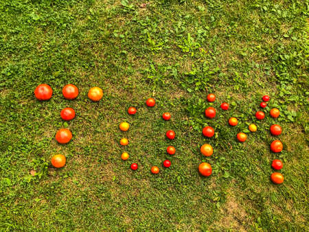 Tomato lettering. Word made from vegetables. the letters T, O and M, the word TOM are lined with red and yellow, round tomatoes. Against the background of the grass. Tomato story, creative lettering.