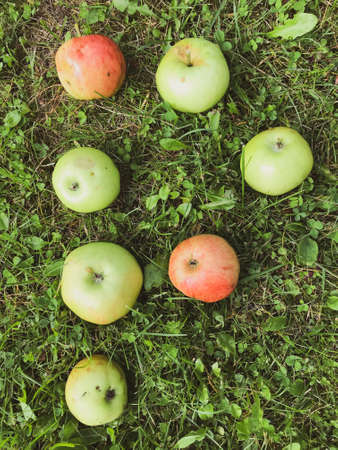 letters from apples. letter p, apple inscription. letters for word, congratulations, creative image of words. edible letter, green, red apples, fruit inscription on green grass.
