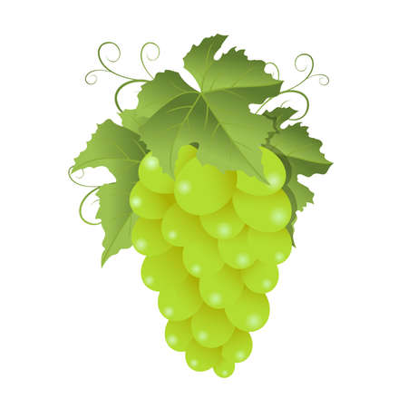 Green grape