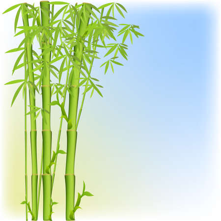 philodendron: Background with a bamboo