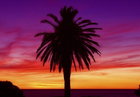 Beautiful sunset and Palm Tree in Camps Bay South Africa
