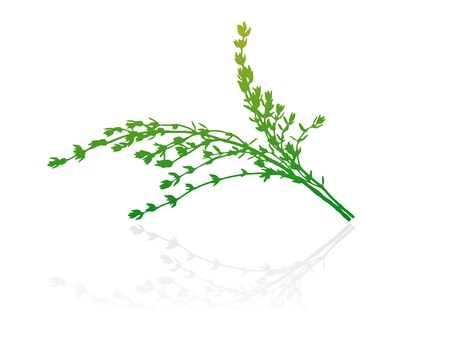 scalable: Isolated green vector shrub on white background.