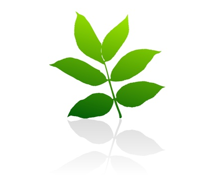 scalable: Isolated green vector leaves on white background. Illustration