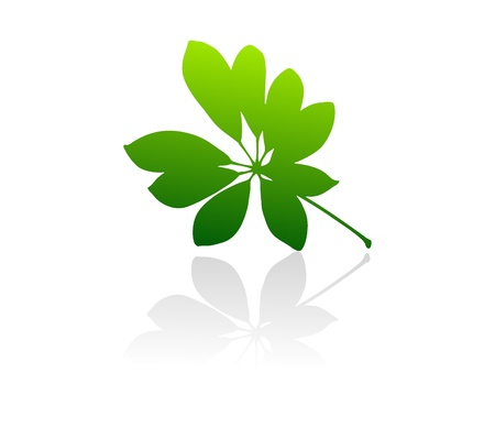 Isolated green vector leaves on white background. Illustration