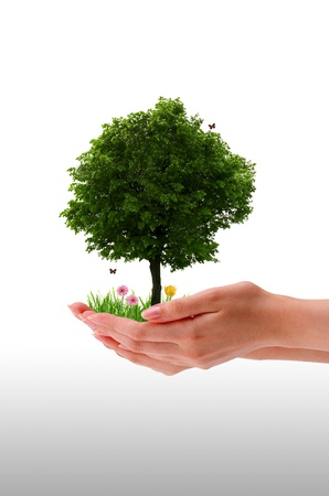 High resolution graphic of a hand holding a tree.  photo