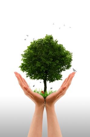 invernadero: Gráfico de alta resolución de manos sosteniendo un árbol.