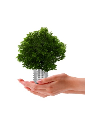 High resolution graphic of a hand holding a tree on white background. photo