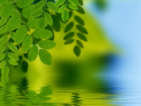 High resolution graphic of Leaves reflecting in water.  photo