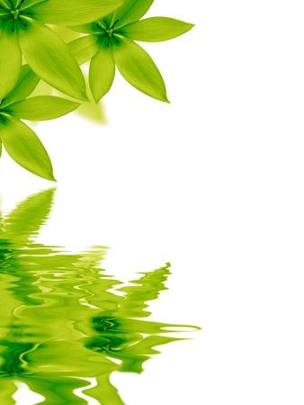 Afbeelding met hoge resolutie van bloemen weerspiegelen in water op witte achtergrond. Stockfoto