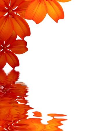 esquineros de flores: Gr�fico de alta resoluci�n de flores que se refleja en el agua sobre fondo blanco. Foto de archivo