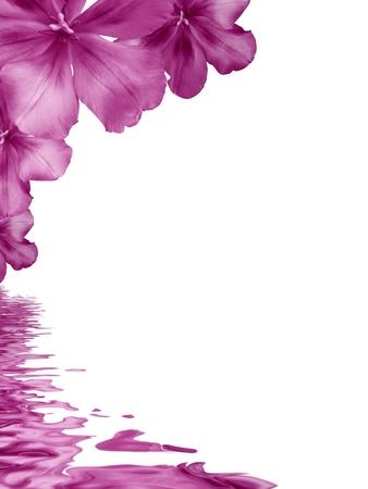 esquineros de flores: Gr�fico de alta resoluci�n de flores rosas, que se refleja en el agua. Foto de archivo