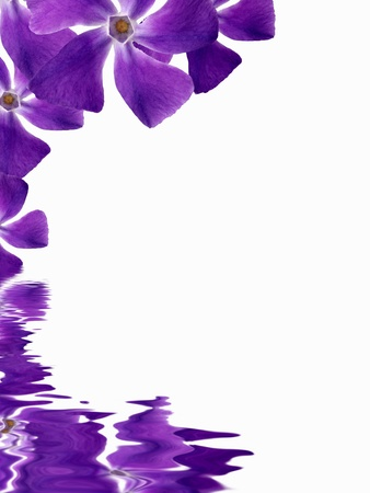 purple flower: High resolution graphic of Flowers reflecting in water on white background. Stock Photo