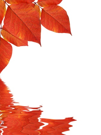 High resolution graphic of Leaves reflecting in water. Stock Photo - 9836383