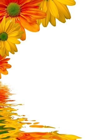 esquineros de flores: Gr�fico de alta resoluci�n de flores amarillas que se refleja en el agua.