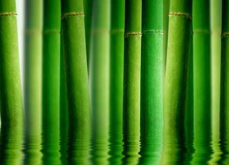 shui: High resolution graphic of a bamboo forest with water reflection.  Stock Photo